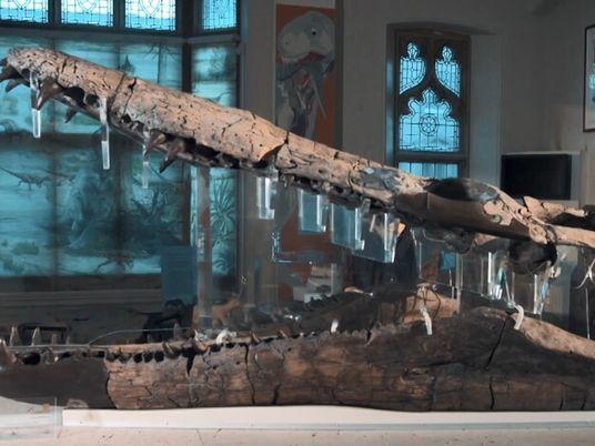Voici le crâne de pliosaure le plus complet jamais découvert