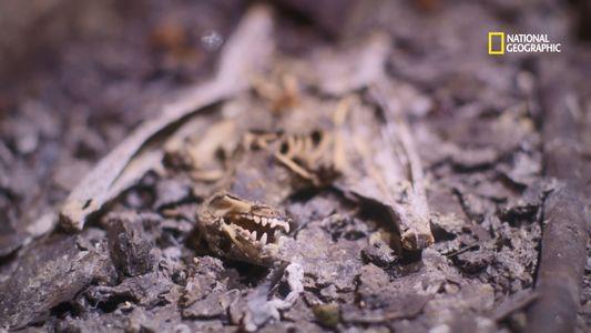 Par quoi ces chauves-souris rhinolophes ont-elles été décimées ?