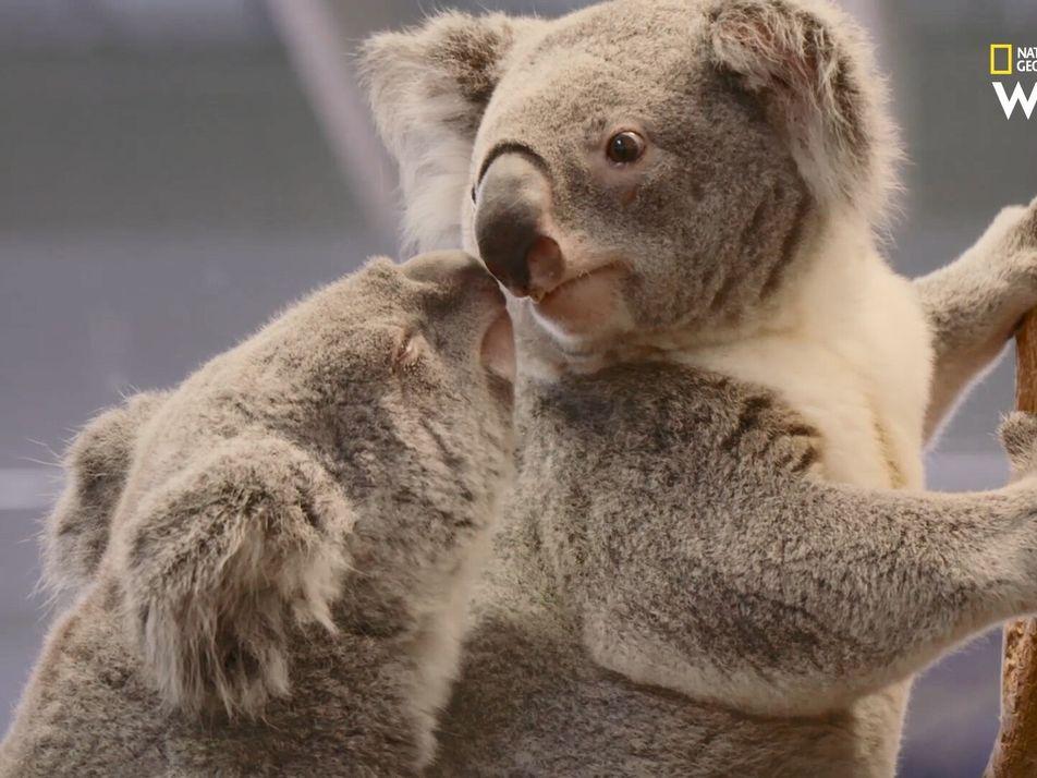 Au cœur du zoo | Bande annonce