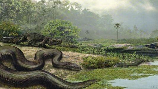 14 mètres de long : le Titanoboa, plus grand serpent de tous les temps