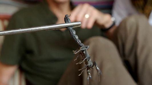 La peur, notre principale ennemie face aux arachnides