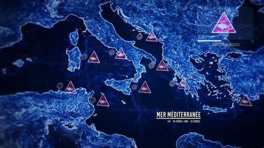 La naissance des zones mortes dans la Méditerranée