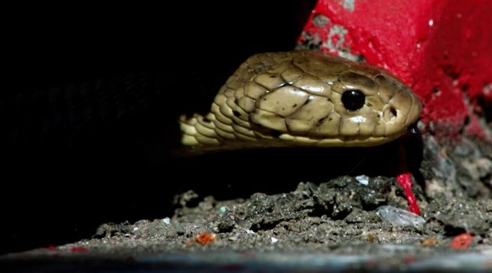 Snakes in the city   Bande annonce