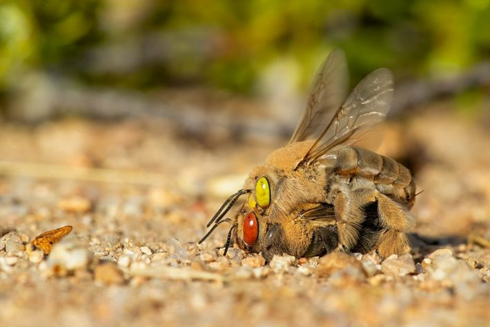 thumbnail_mating on ground 2