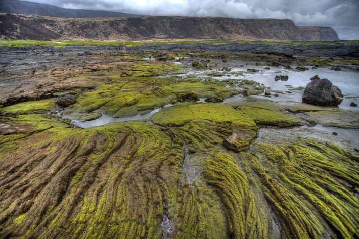 Aventurez-vous sur le sentier historique national d'Ala Kahakai pour observer les mares d'eau de mer formées ...