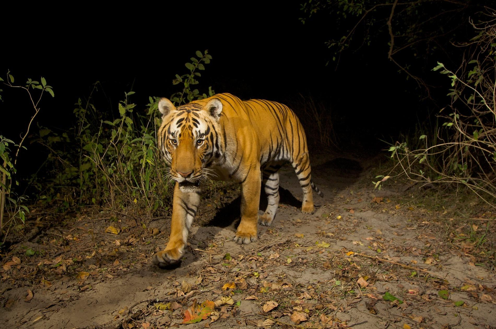 8 espèces menacées d'extinction par le trafic illégal d'espèces sauvages