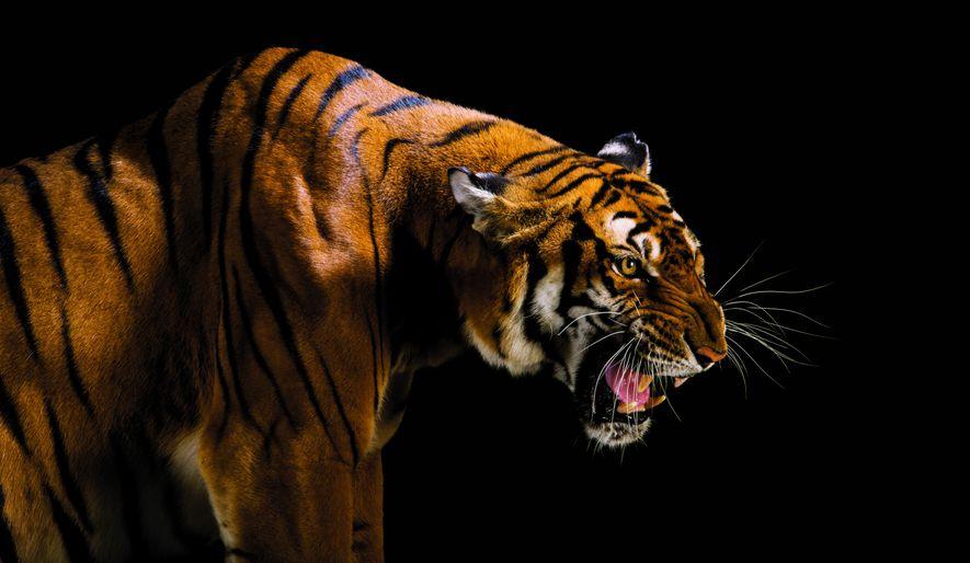 Normalement, une extinction d'espèce est trop rare pour qu'un humain y assiste
