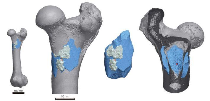 La tomographie à rayon X utilisée par les chercheurs permet de réaliser une reconstitution 3D d'une ...