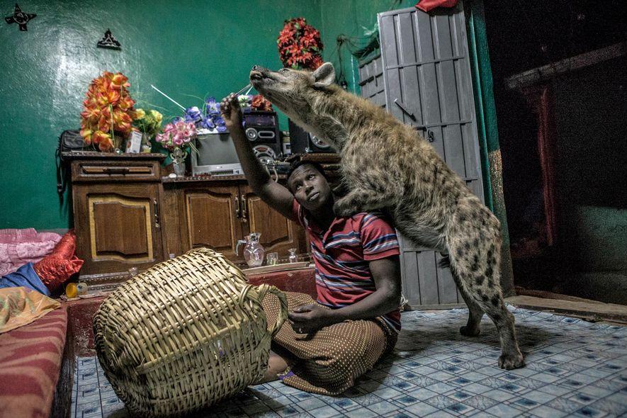 hyena_village