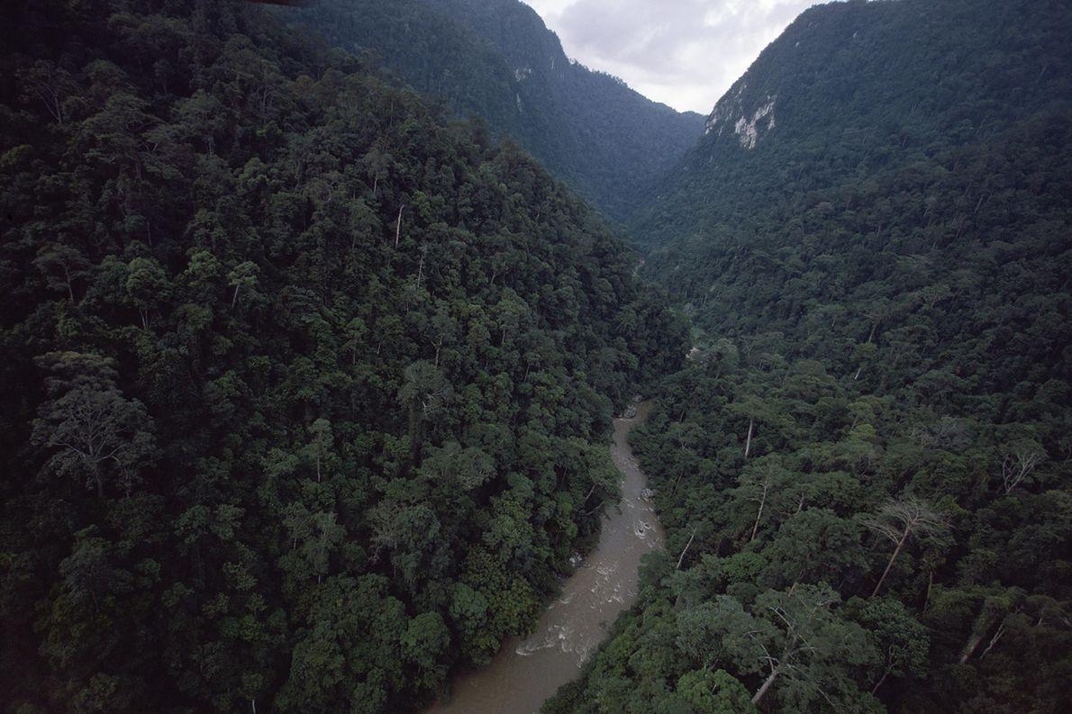 Cet explorateur a trouvé le moyen de lutter contre la déforestation