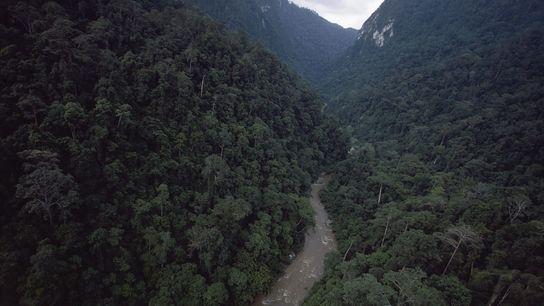 topher-white-rainforest