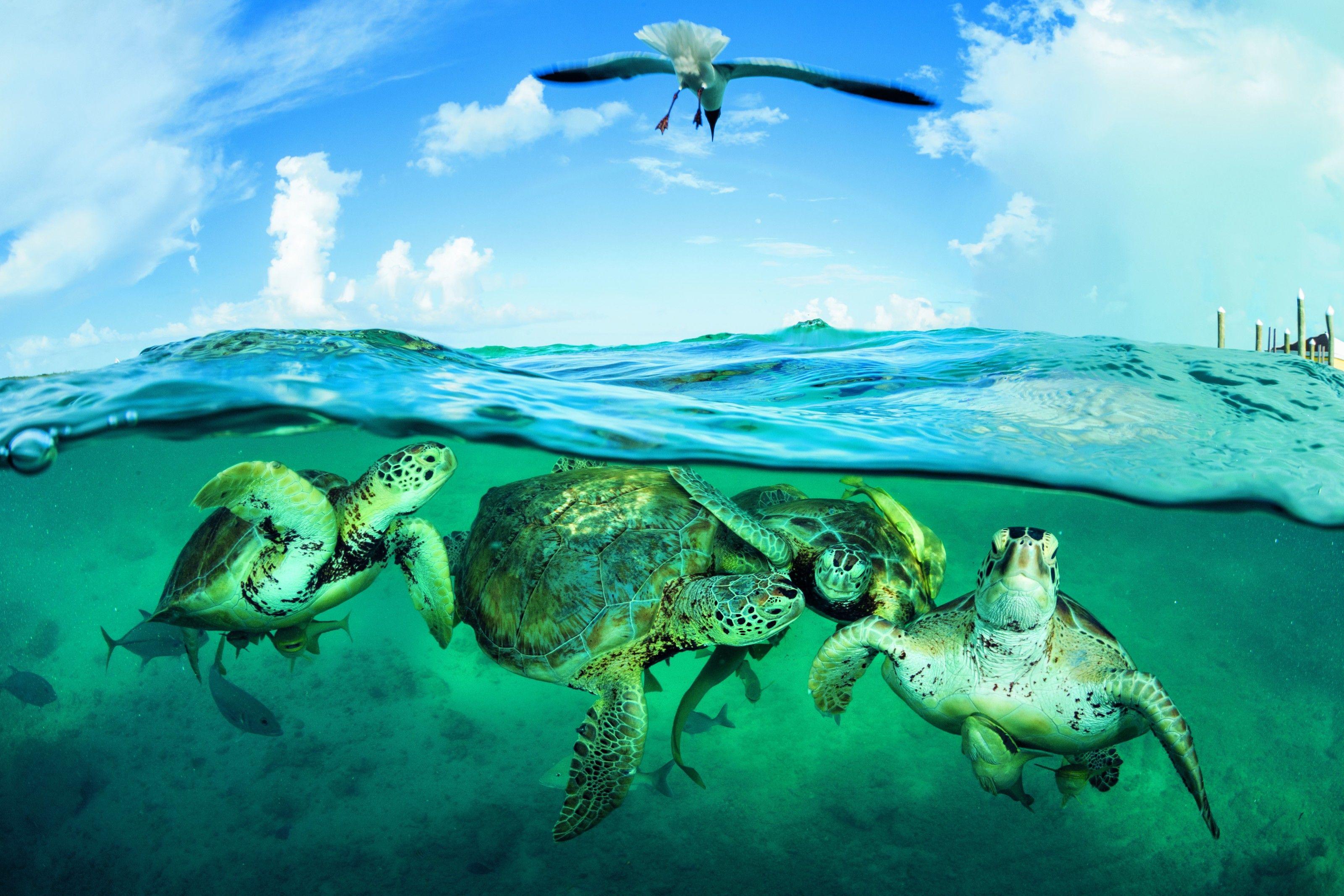 Au Costa-Rica, on revend les œufs de tortue pour protéger l'espèce | National Geographic