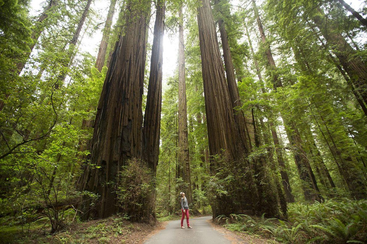 Le bosquet de The California Federation of Women (La fédération californienne des femmes), est situé sur ...