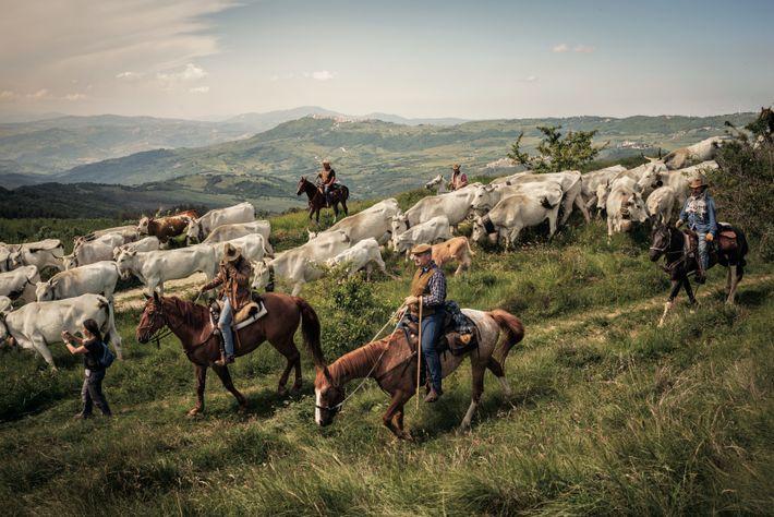 Le voyage des Colantuono entre les pâtures d'hiver et d'été appartient à une tradition partagée par ...