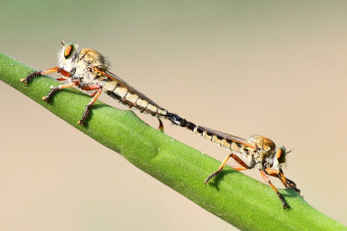 Le photographe Aaditya Deodhar était à la recherche d'oiseaux dans les hautes herbes du Bangalore, en ...