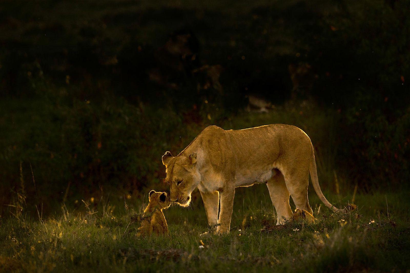 Le monde animal en 28 images sublimes