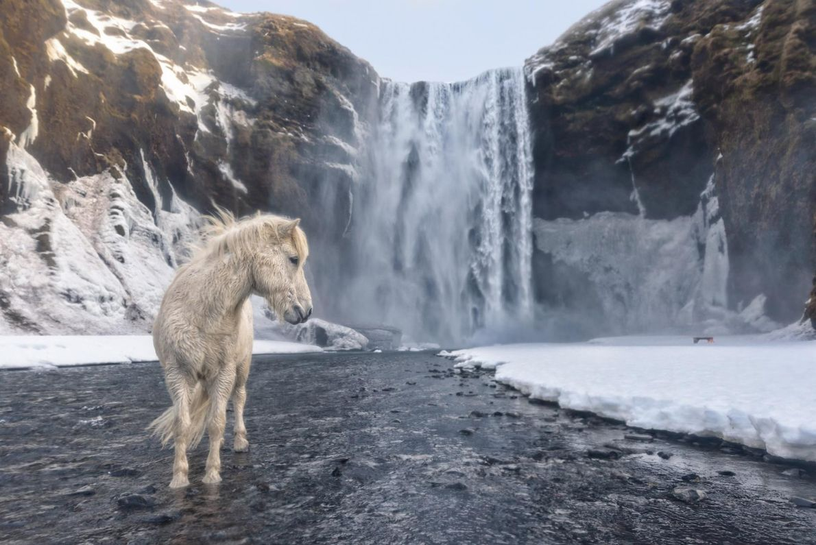Pour prendre ce cliché, le photographe E. Arencibia a affronté des températures glaciales : « Une ...