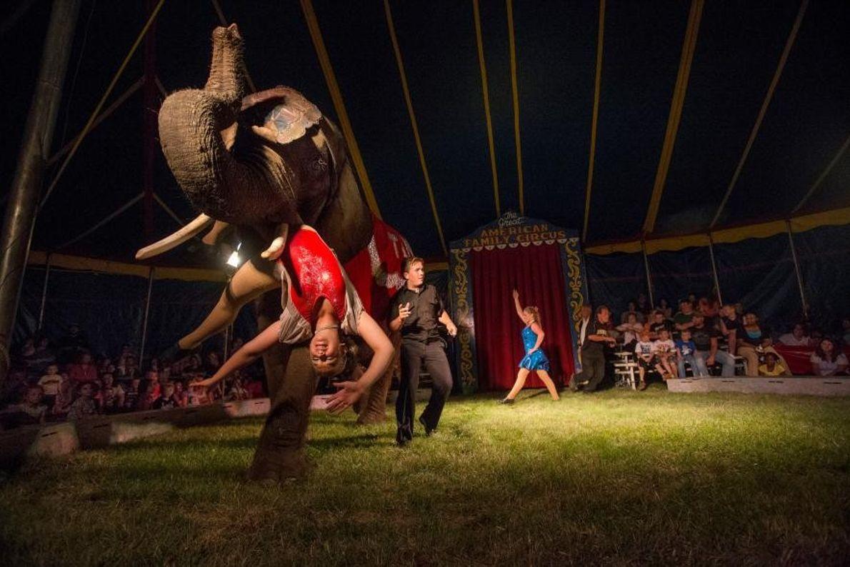 Cathalina Liebel, descendante d'une famille d'artistes de cirque dès le 16e siècle, est suspendue à la ...