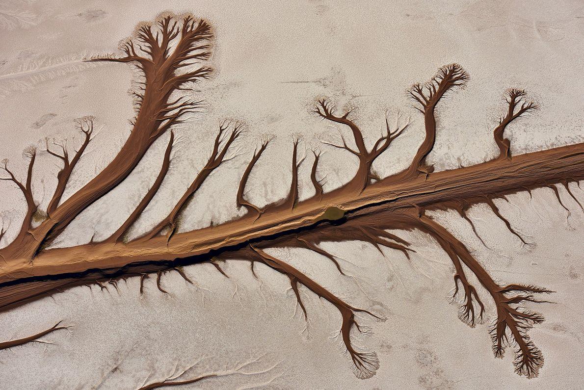 Vu du ciel, le delta du fleuve Colorado prend la forme d'un arbre en Basse-Californie, au ...
