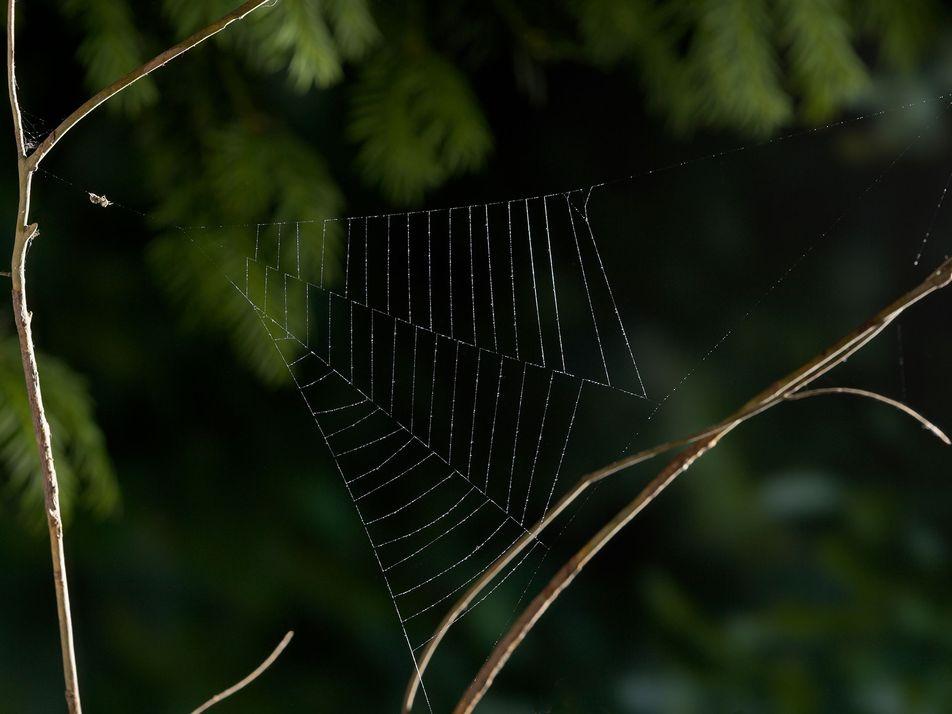 L'accélération de cette araignée dépasse celle des fusées