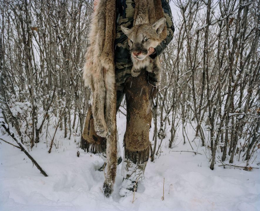 Un chasseur montre la peau d'un puma qu'il a abattu cette année dans le sud de ...