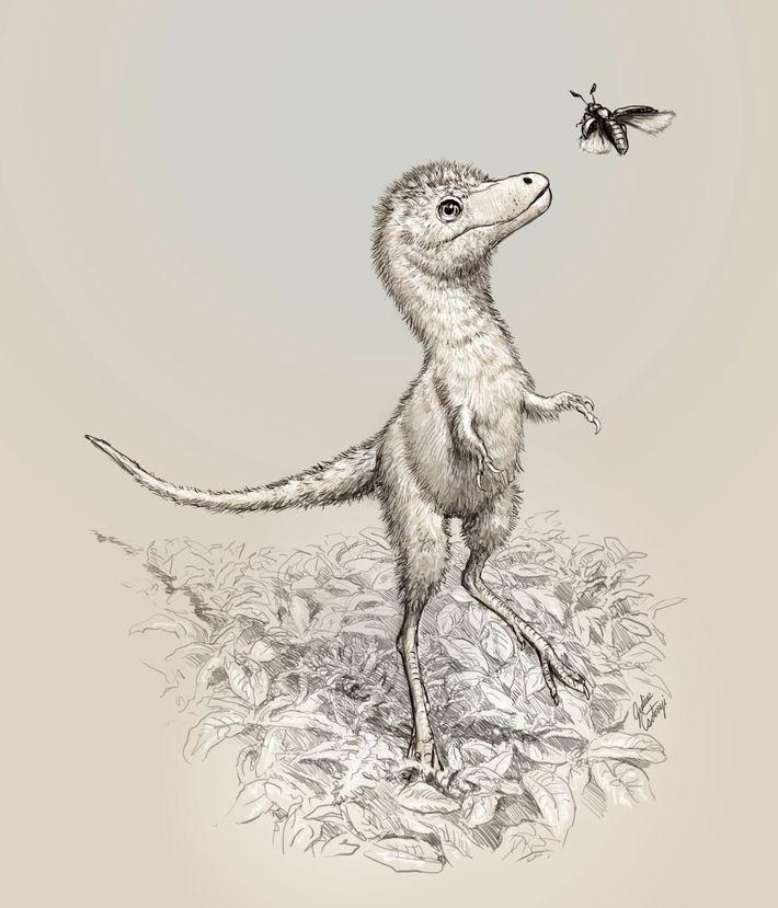 Cette illustration montre ce à quoi le Tyrannosaurus rex aurait pu ressembler à la sortie de ...