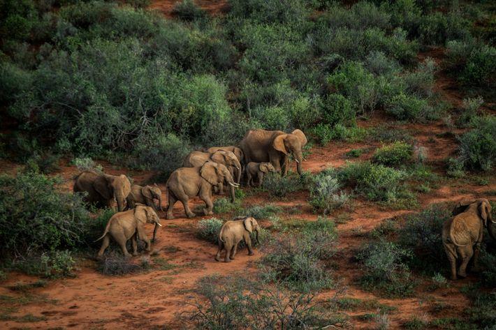 Un troupeau d'éléphants traverse une zone au sud-est du sanctuaire pour éléphants de Reteti. Les éléphants ...