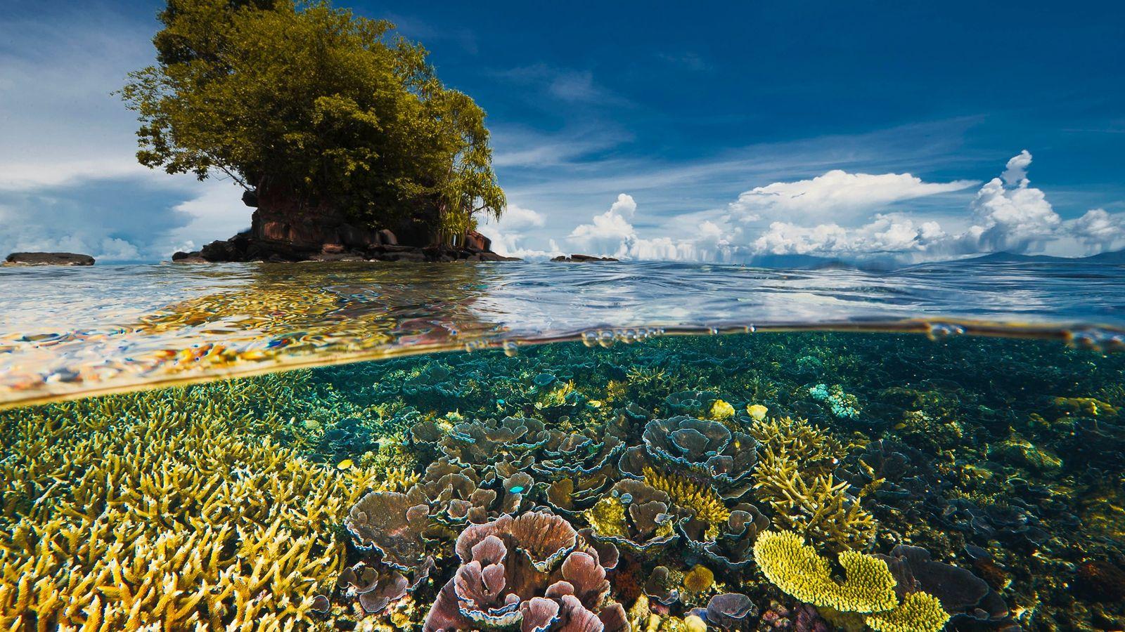 Une péninsule voisine protège ce délicat jardin de coraux des tempêtes de la baie de Kimbe, ...