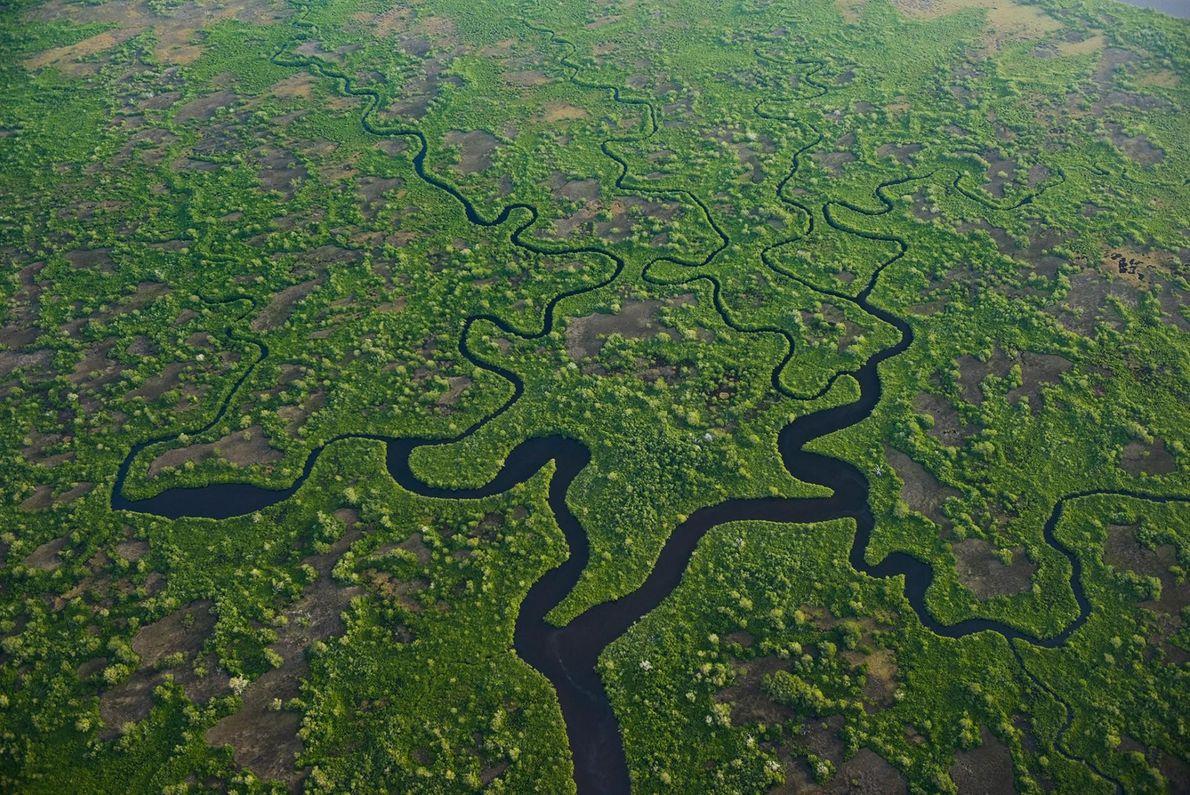 PARC NATIONAL DES EVERGLADES, ÉTATS-UNIS Les immenses marais sub-tropicaux de la Floride, décrits comme « une rivière ...