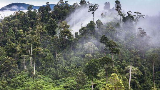 PATRIMOINE DES FORÊTS TROPICALES DE SUMATRA, INDONÉSIE Les 2,5 millions d'hectares des parcs nationaux Gunung Leuser, Kerinci ...