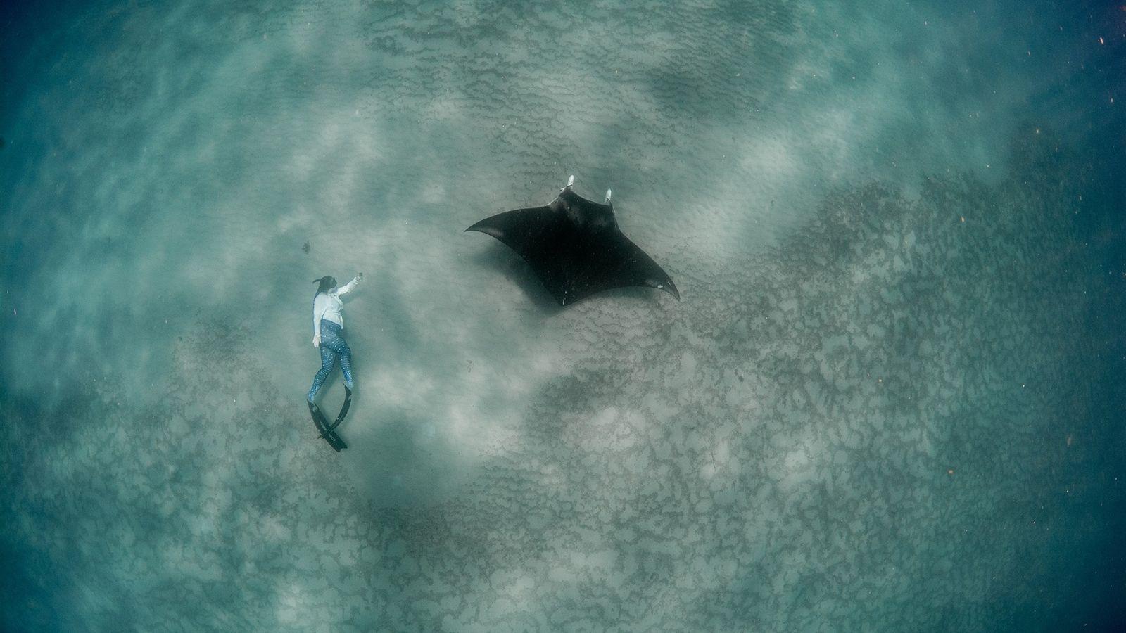 La chercheuse Christina Coppenrath immortalise sa plongée aux côtés d'une jeune raie manta dans le sud ...