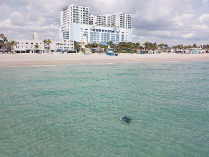 Une raie manta nage au large de Margaritaville, le complexe hôtelier de Jimmy Buffet. La plupart ...