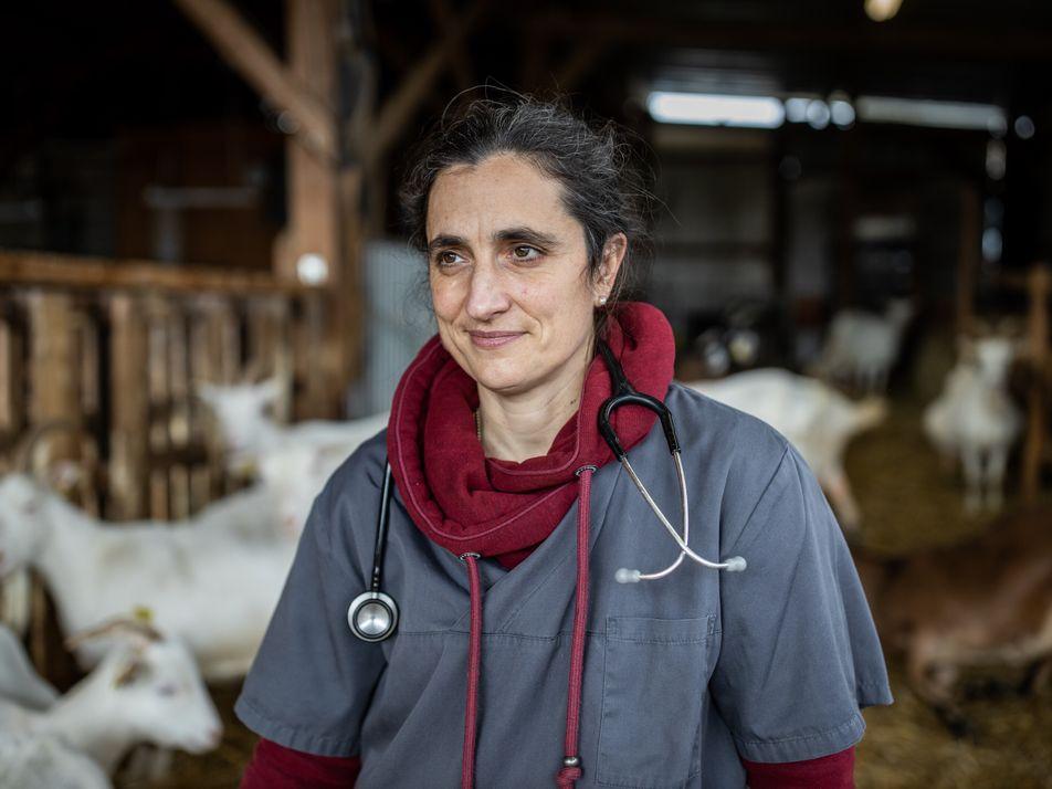 Vétérinaire de campagne, un métier en voie de disparition ?