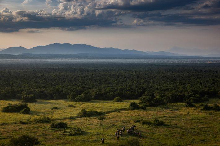 Le retour des éléphants dans les Virunga a réjoui les rangers en cette année morose. Ils ...