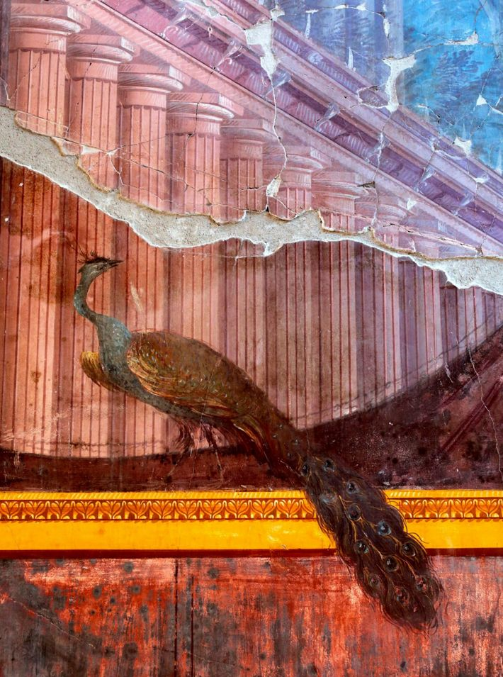 Peacock, Mural painting, Villa Oplontis, Torre Annunziata, Campania, Italy