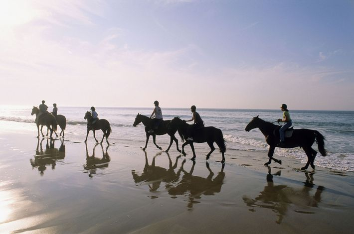 Des cavaliers parcourent le rivage de la côte Atlantique sur l'île de Ré, une île au ...
