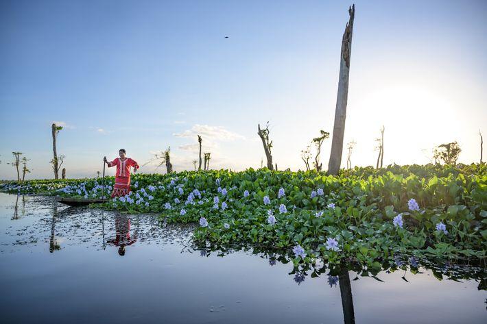 Marites Babanto manœuvre un canoë dans une zone humide recouverte de végétation en fleurs. Depuis 30 ans, cette ...