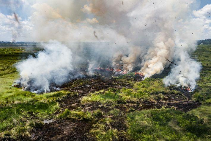 Les entreprises agricoles et les producteurs d'huile de palme drainent des tourbières à Talacogon, une municipalité ...