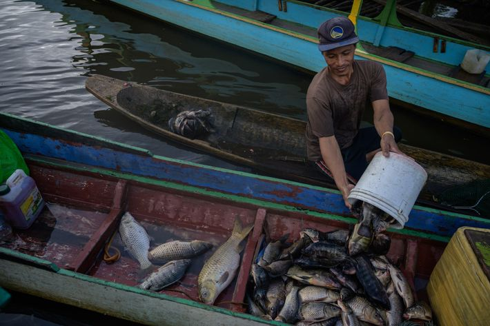 Ricky Reyes, un membre de la tribu Manobo, transporte ses prises du matin remontées sur le lac ...