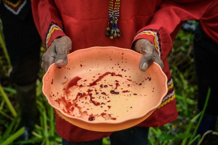 Le sang d'un poulet égorgé est récupéré dans un bol lors d'un rite sacrificiel. Les gouttes ...
