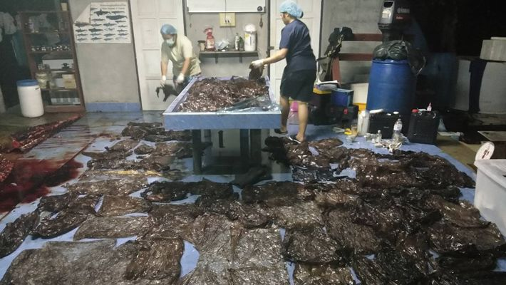 L'estomac de cette baleine contenait plus de 9 kilos de plastique