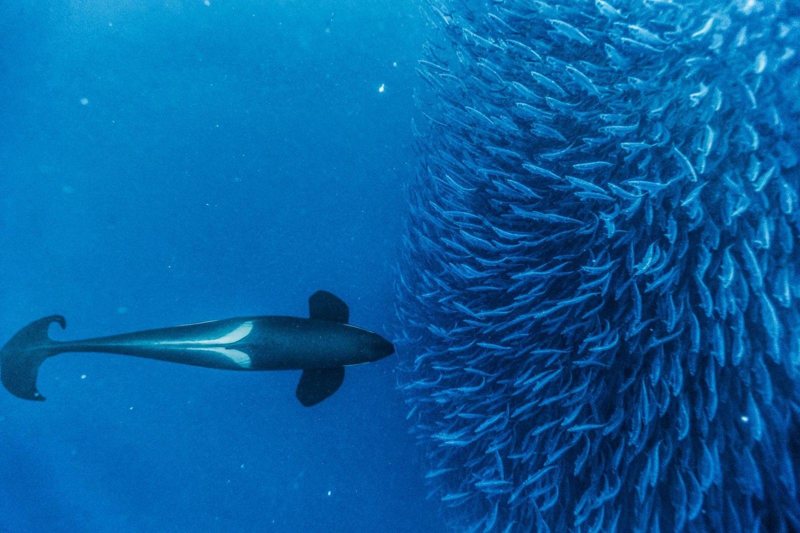 14 photos de baleines à couper le souffle