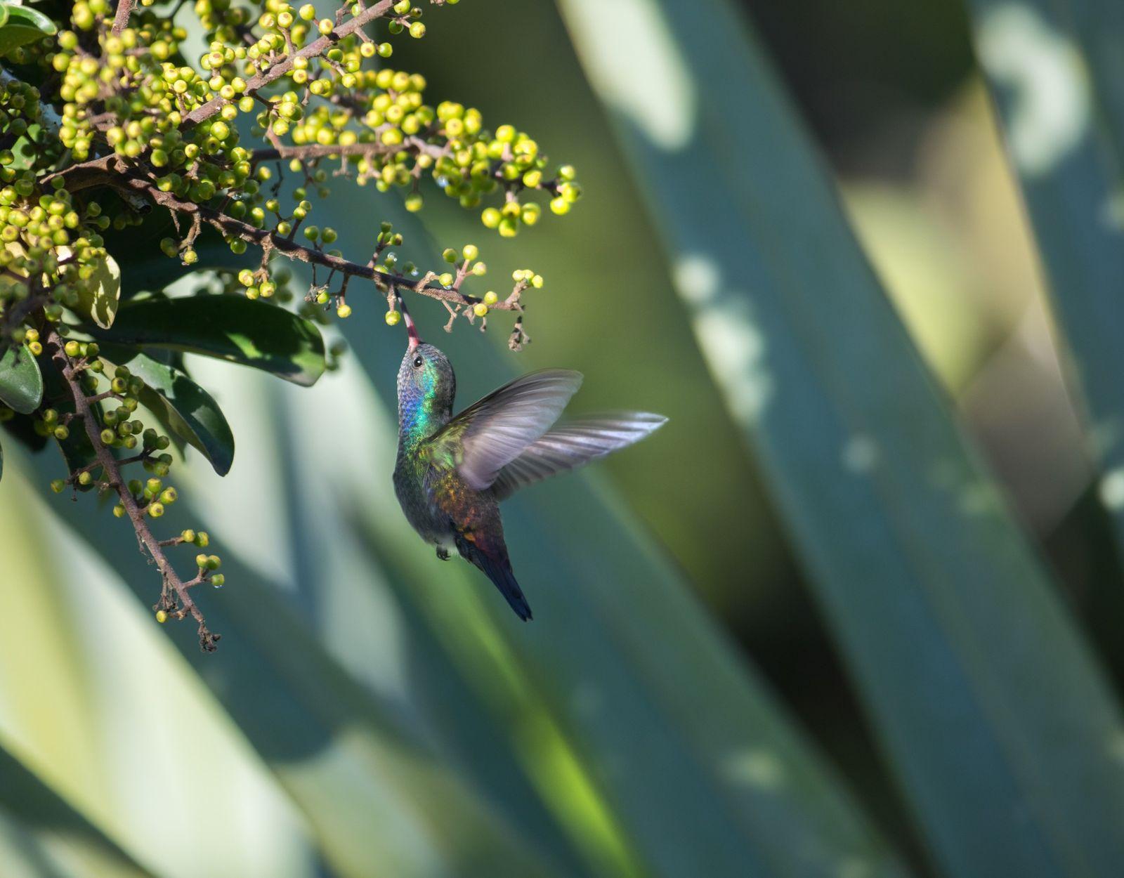 Le mutualisme : quand la nature est à l'œuvre