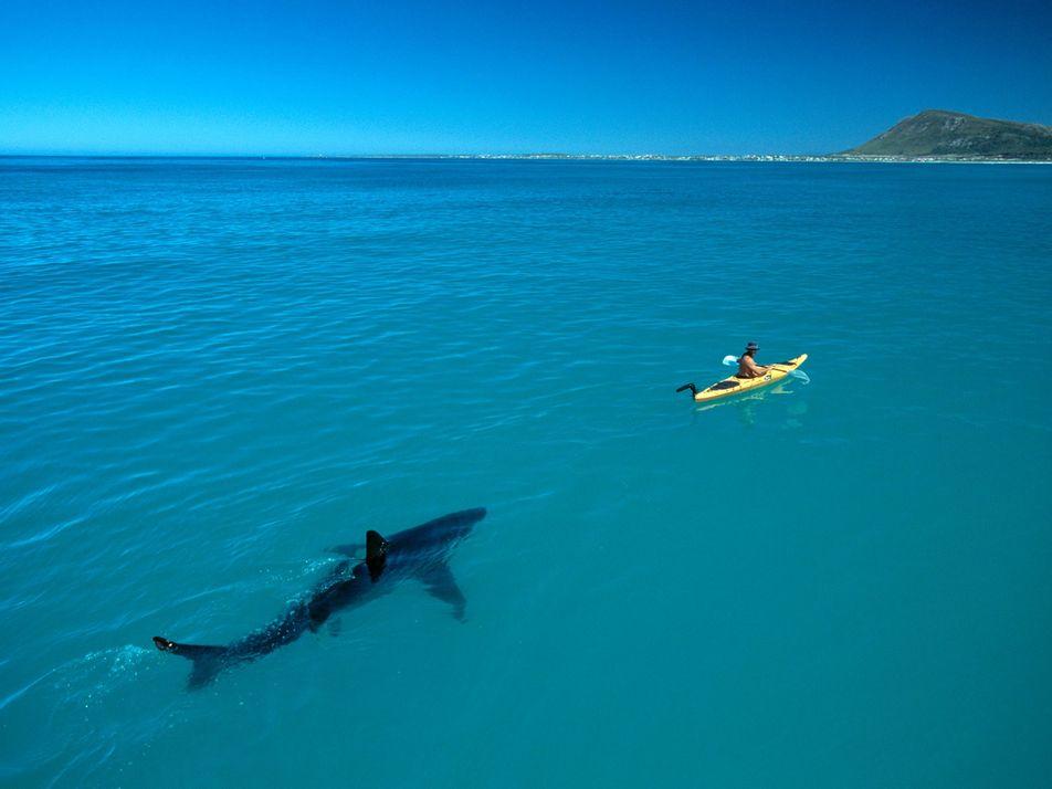 Comment cette impressionnante photo de requin est devenue virale