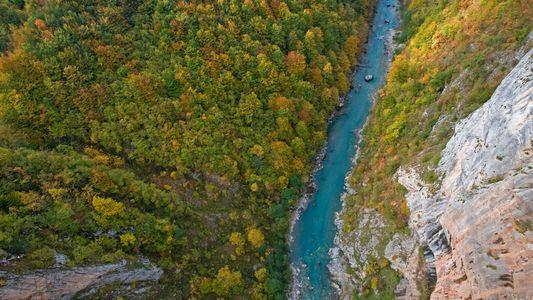 Forêts : 37 % des arbres européens sont menacés d'extinction
