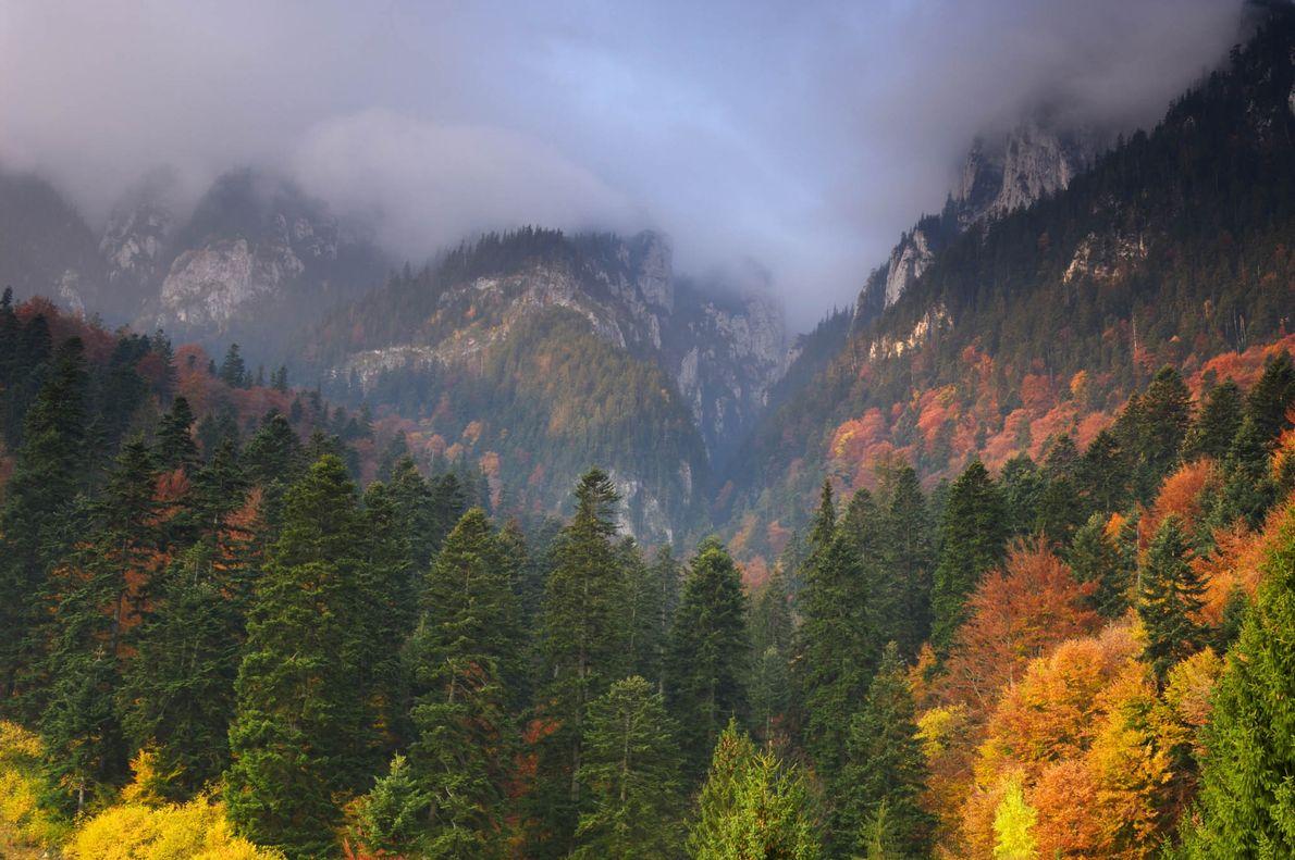 Piatra Craiului National Park, Romania