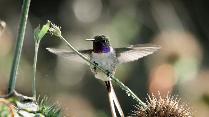 Le Chili abrite une faune spectaculaire, dont de nombreuses espèces endémiques.