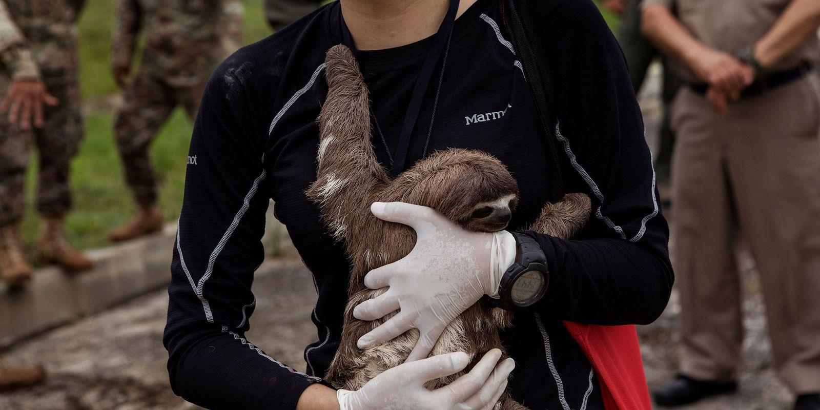 Pérou : 22 animaux sauvages capturés pour faire des photos avec des touristes ont été libérés