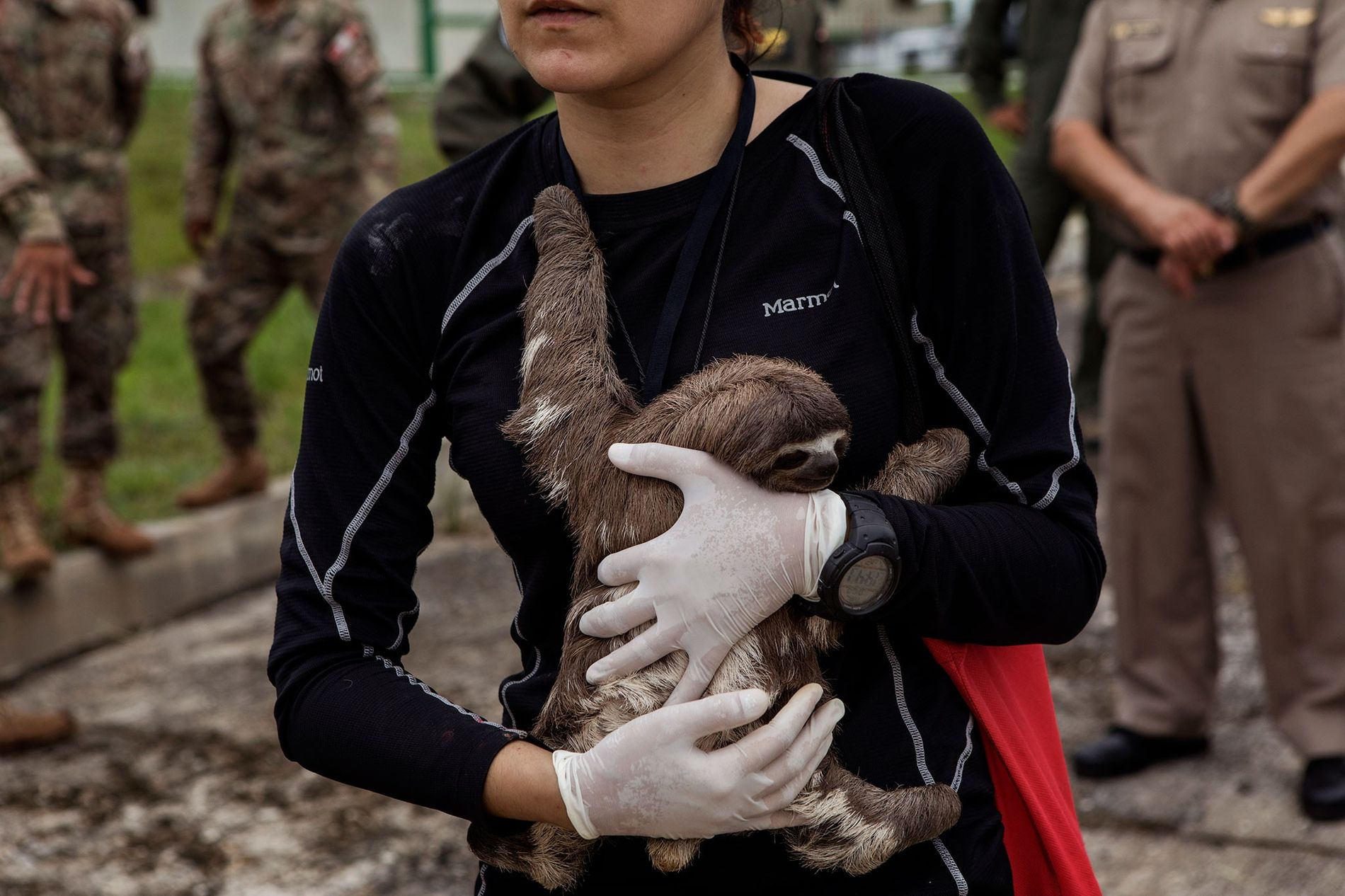 La vétérinaire Violeta Barrera Navarro tient tendrement un paresseux après l'opération de sauvetage entreprise à Puerto ...