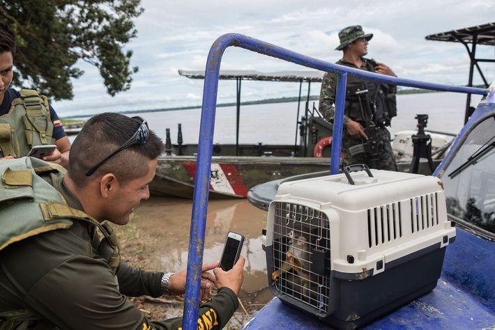 Un officier de l'armée de l'air prend en photo un saïmiri qui vient d'être secouru. Les ...